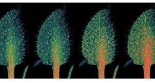 Растения не менее живые, чем животные?