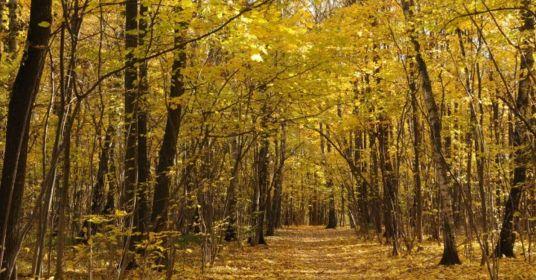 Прогулка в Битцевском лесу