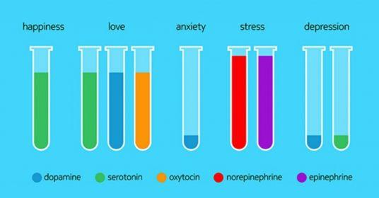 Нейромедиаторы и гормоны в картинках