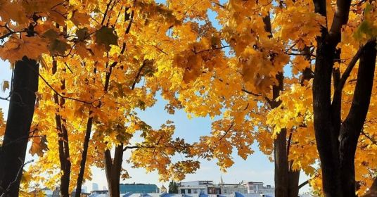 Осенние клены в парке кочующих статуй