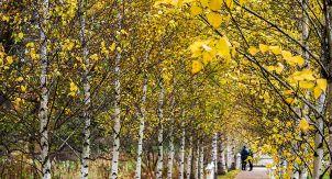 Осень в Монрепо: часть третья