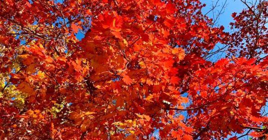 Золотая осень в Приморском крае