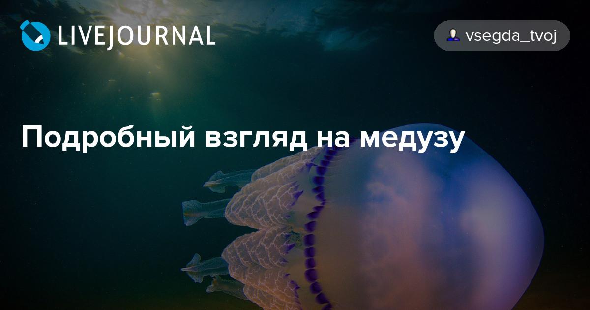 vzglyad-meduzi-emulyator