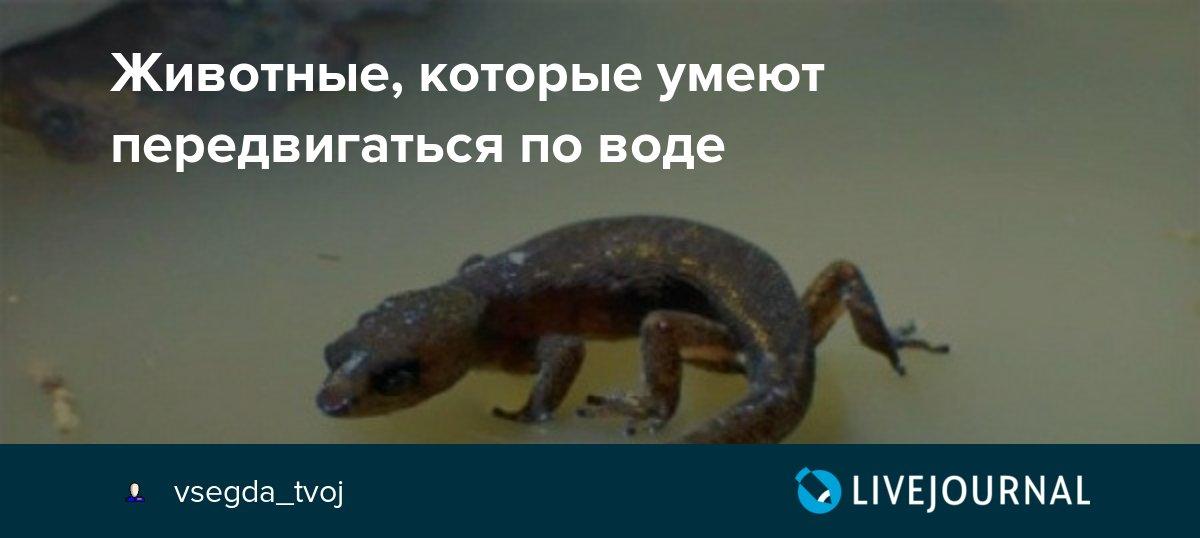 Ящерица-василиск ящерица которая умеет ходить по воде