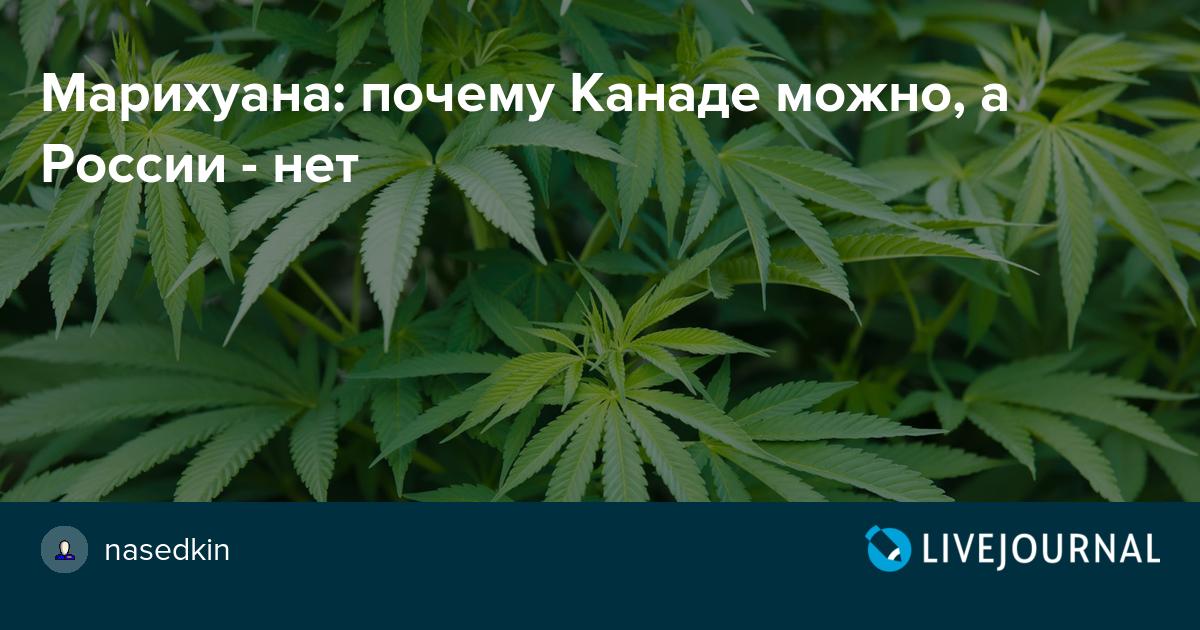 Курильщики марихуаны в россии одесса семя конопля