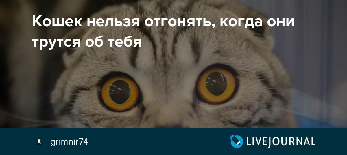 Причины почему нельзя отгонять кошек когда они трутся об тебя
