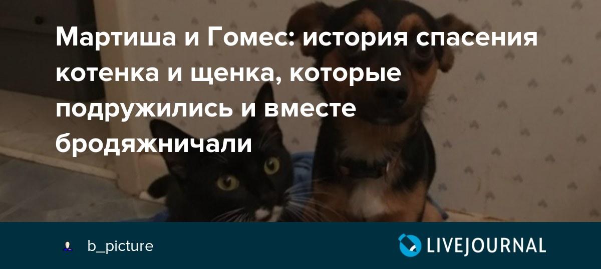 фото котёнка и щенка вместе