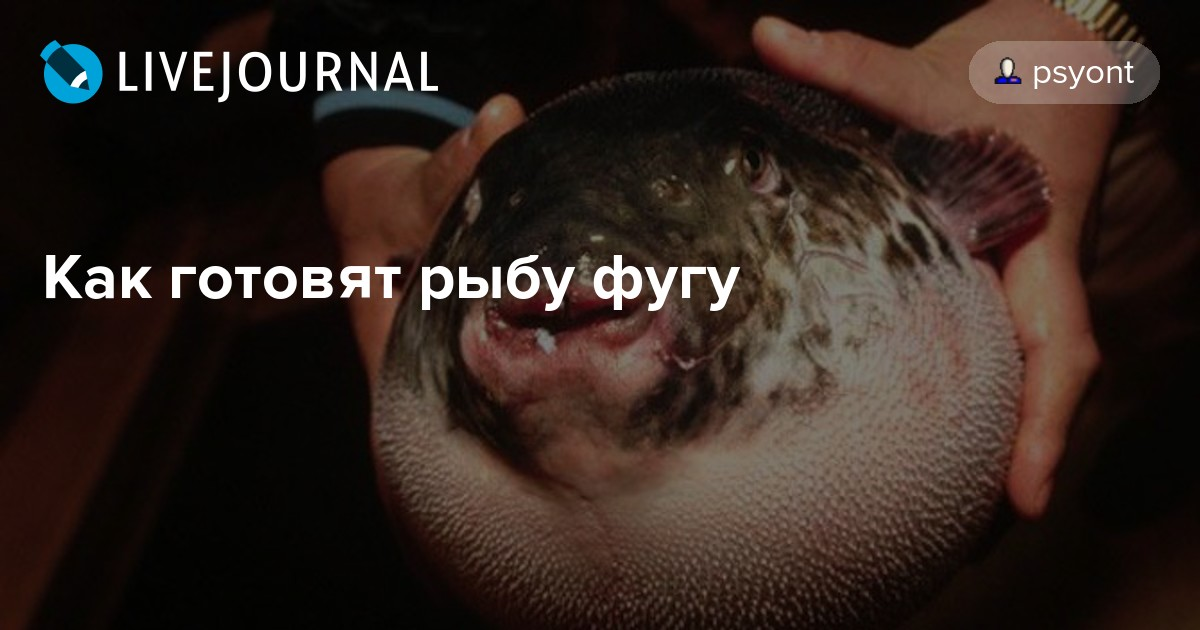 как готовят рыбу фугу видео