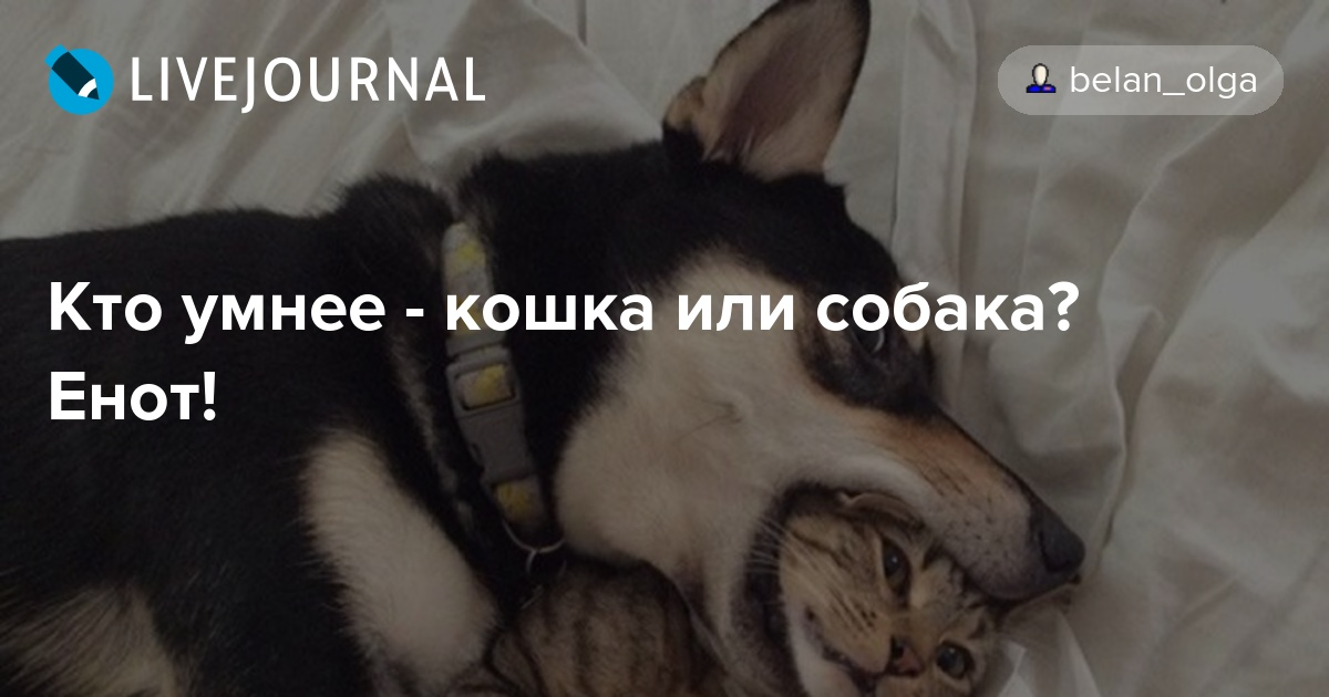 кто умнее кошки или собаки менее, среди альпинистов