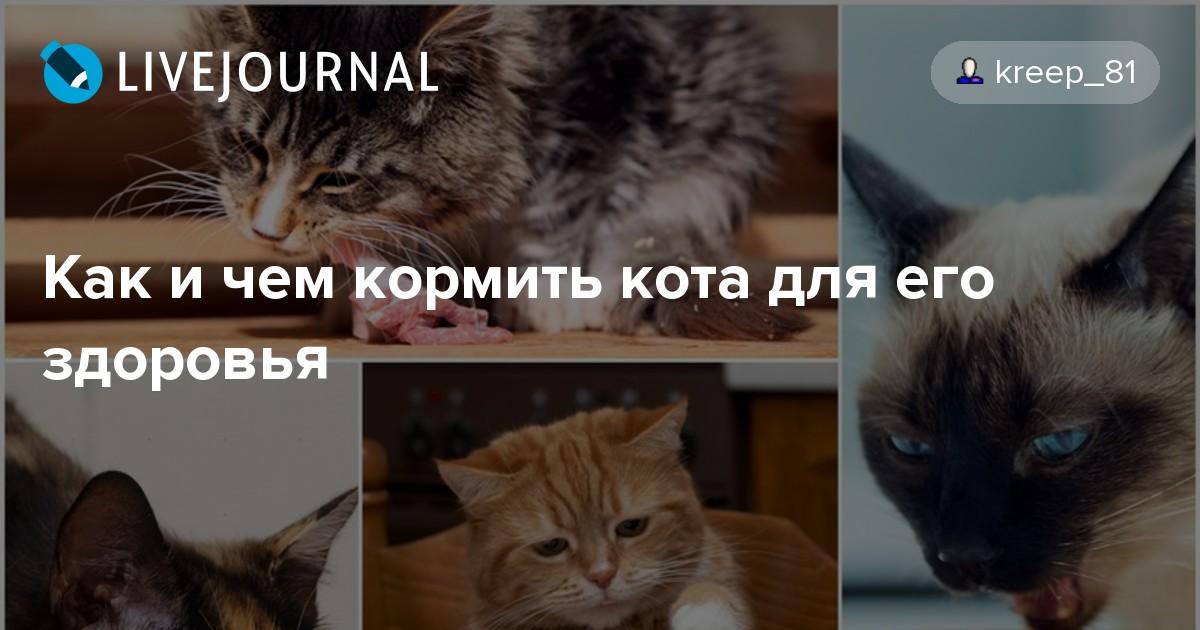 Чем кормить кошек в домашних условиях