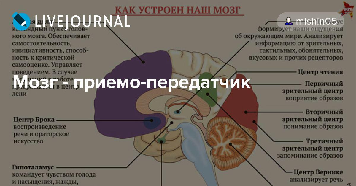 Изучение мозга человека доклад 121