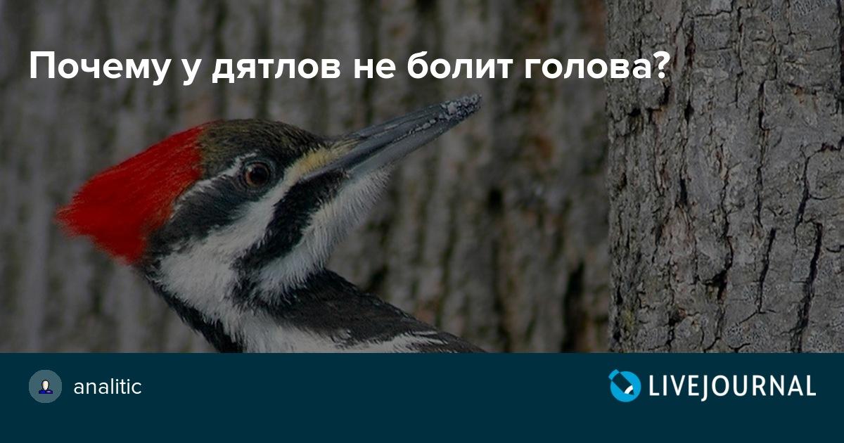 котлетки не болит голова у дятла картинка крылья позволяют стригунам