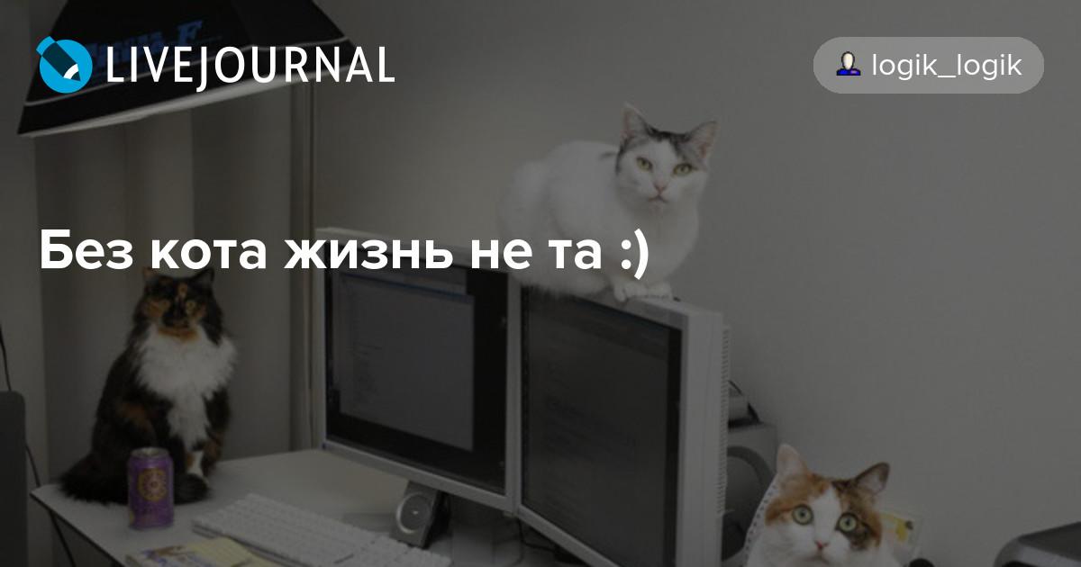 Как продлить жизнь домашнему коту?