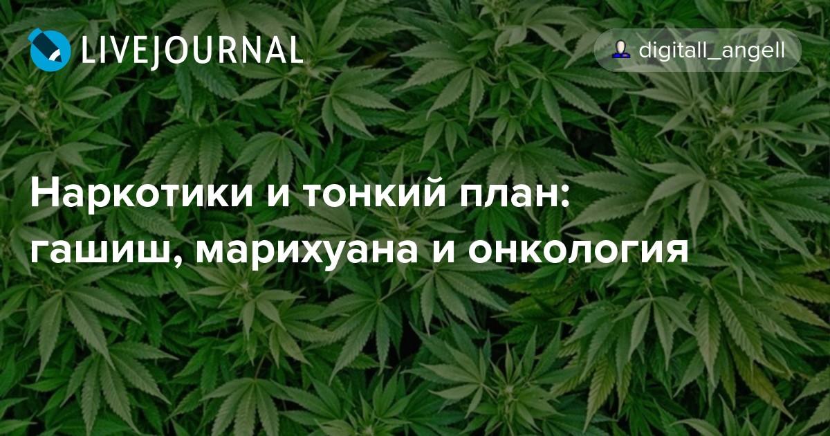 Что за наркотик гашиш Наркотик онлайн Миасс