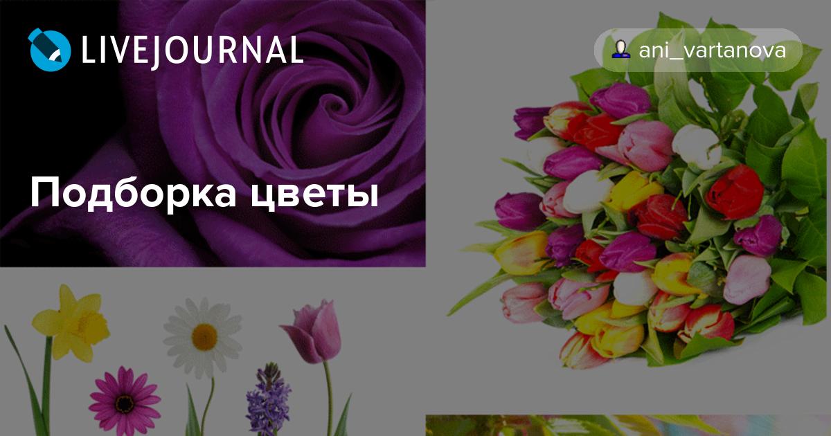 Цветы для анюты
