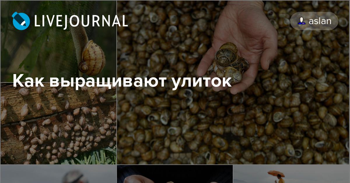 Условия для выращивания улиток 102