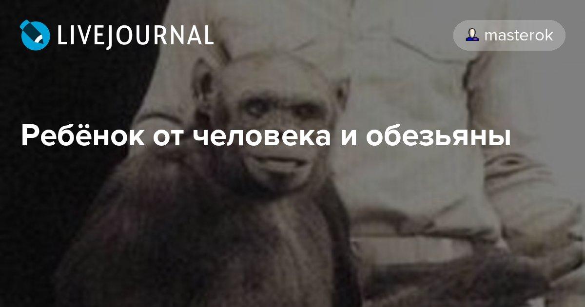 Во флориде горилла родила негритенка