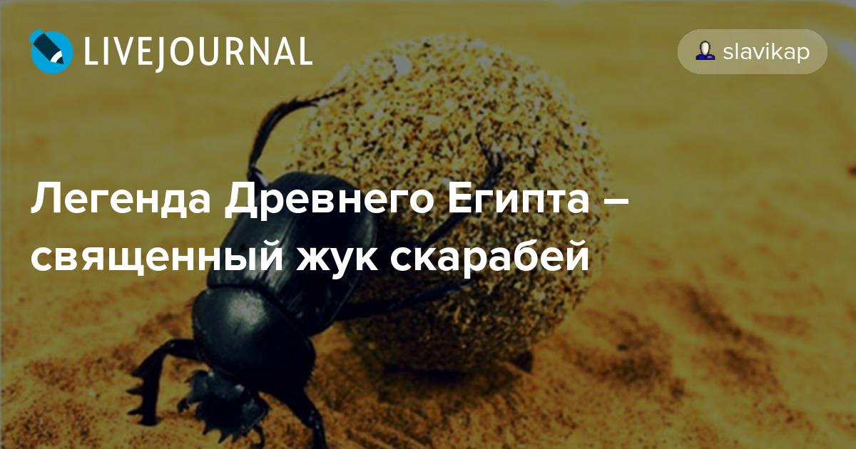 Кто такой жук скарабей