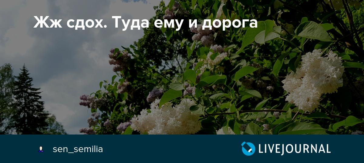 Почему я не ушел в Яндекс.дзен?