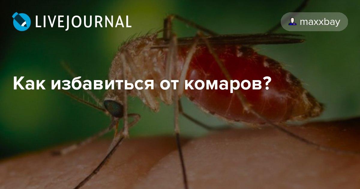 Как избавятся от комаров в домашних условиях 258