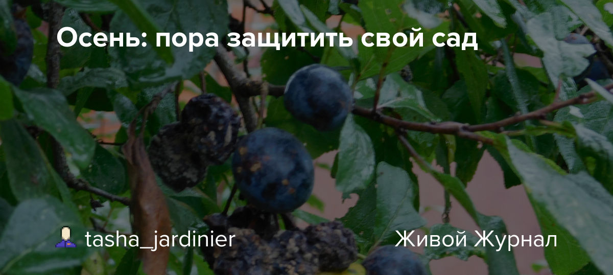 tasha-jardinier.livejournal.com