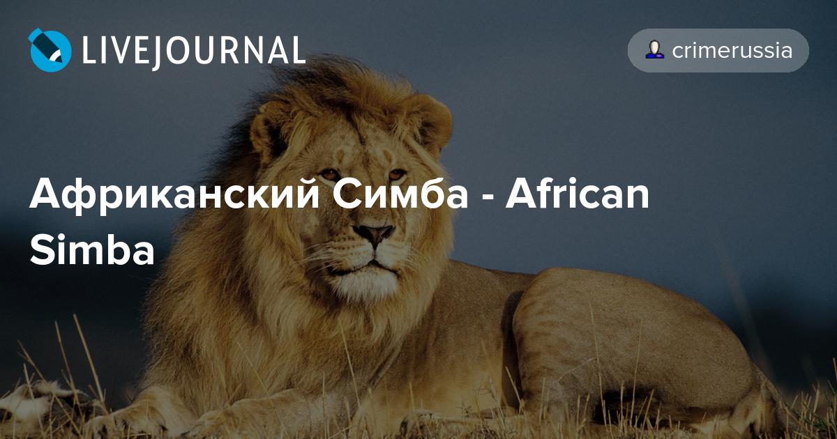 african simba автомат