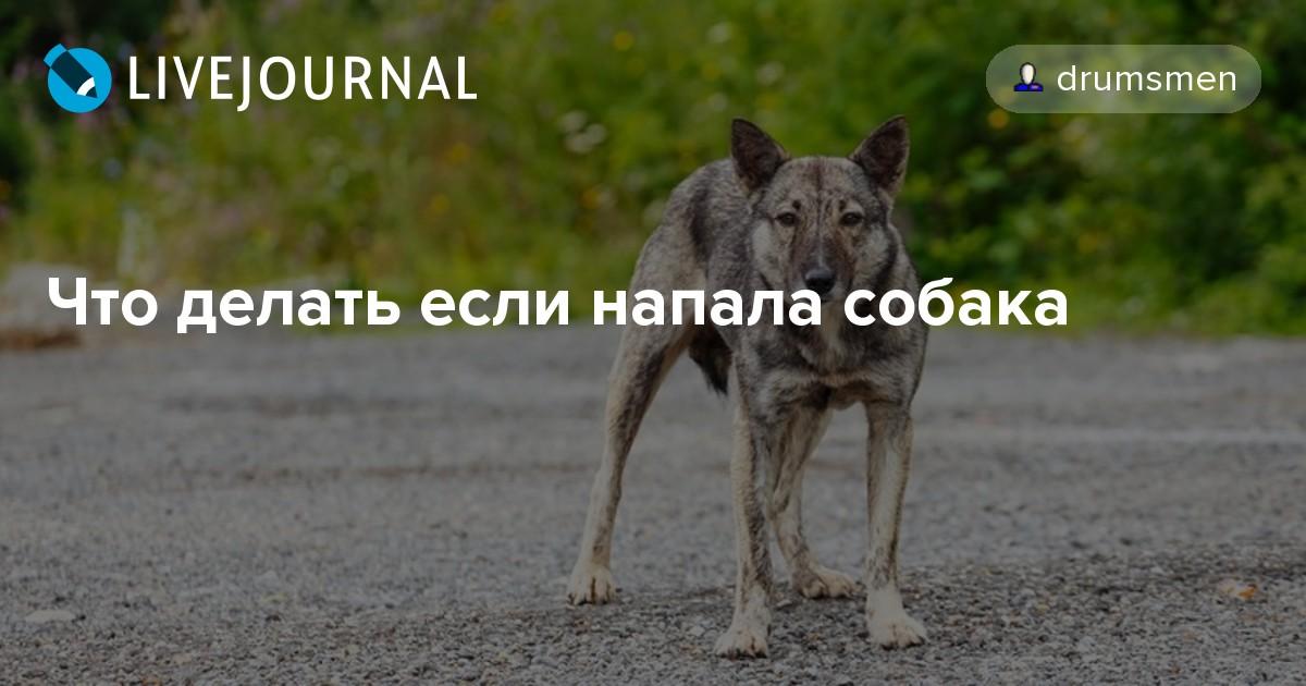 Что делать если собака кидается на машины