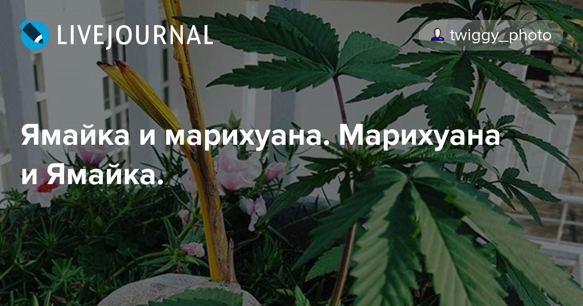 Ямайка отзывы марихуана проращивание семян марихуаны видео