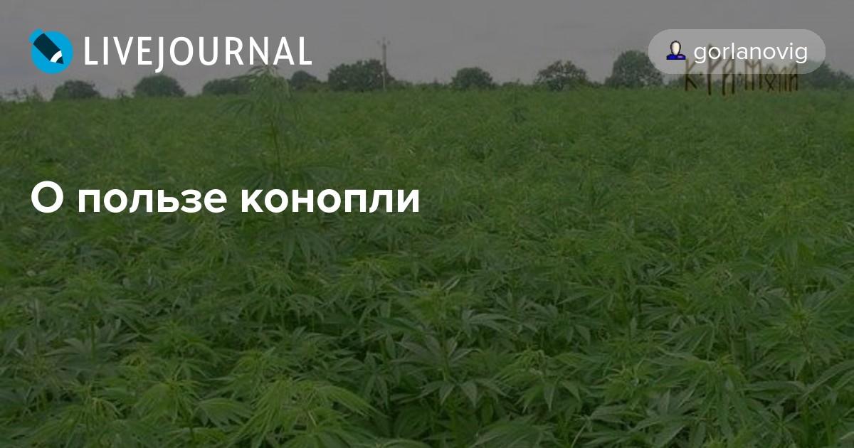 Еще раз о пользе марихуаны сделай сам марихуана