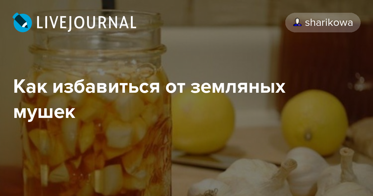 Как избавиться от земляных мушек: sharikowa — LiveJournal