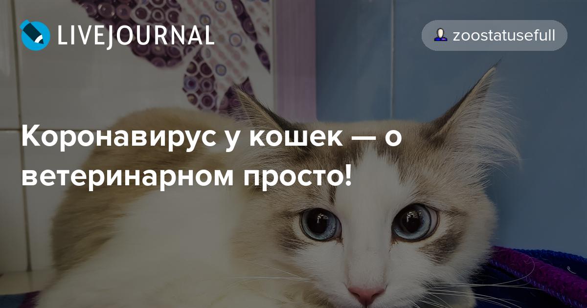 диета кошек при коронавирусе