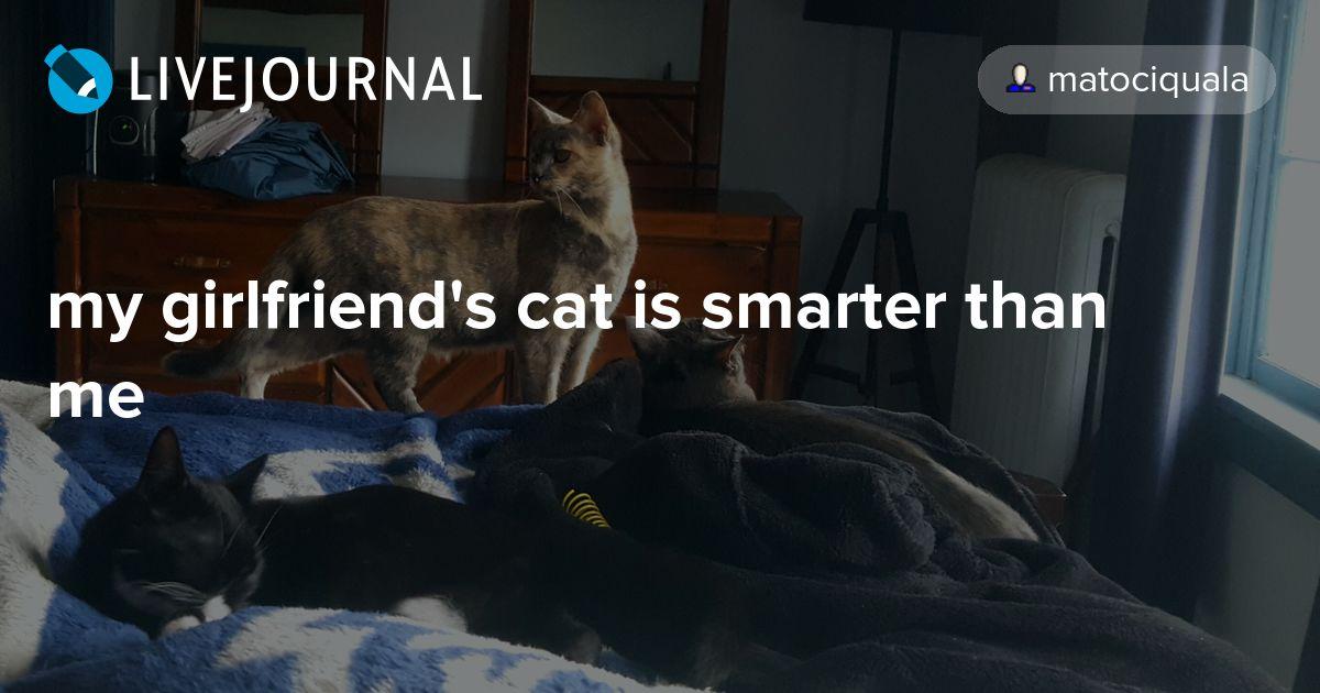 my girlfriend's cat is smarter than me: matociquala