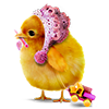 ajushka wishes you a Chicken