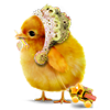 enele sent you a chicken