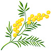 cheslava_romana sent you a branch of mimosa.