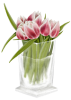 shefe sent you a beautiful bouquet of tulips.