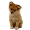 gingasaur sent you an adorable puppy!