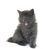 mozartianka sent you a fluffy kitten!