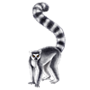 parapluies sent you a lemur!