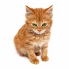 mspinto64 sent you a ginger kitten!