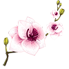 apm_1 sent you an orchid!