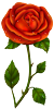 develish1 sent you a lovely rose!