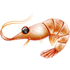 ext_268459 sent you a Shrimp!